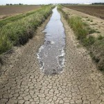 "As reported on 6/19 in the Sacramento Bee: ""Irrigation water runs along a dried-up ditch in the Sacramento Valley. 