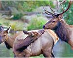 elk-nps2